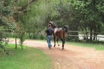 worker walking with horse.jpg